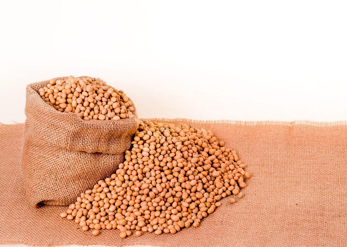 Mączka sojowa – uzupełnienie białka i aminokwasów w diecie trzody chlewnej