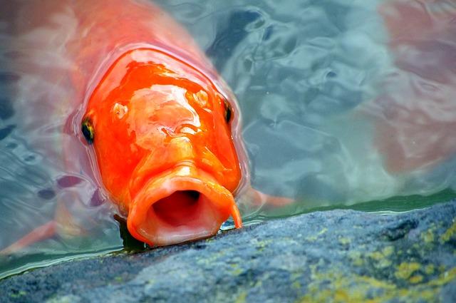 Chcesz aby w twoim oczku wodnym pojawiły się ryby?