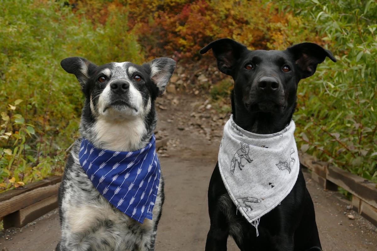 Czy psy powinny nosić ubranka dla zwierząt